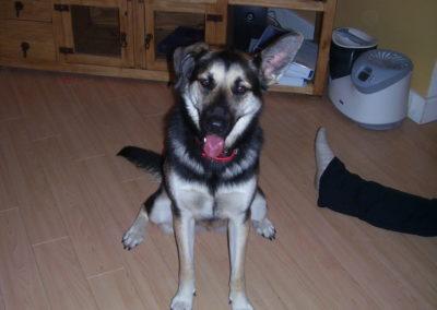 2009-12 - Commissioned Painting - Pet Portrait Painting - Beans Original Image