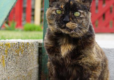 2015-04 - Commissioned Pet Portrait Painting - Abbey - original image