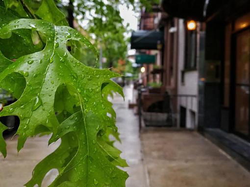 2017-05 – New York, New Leaf