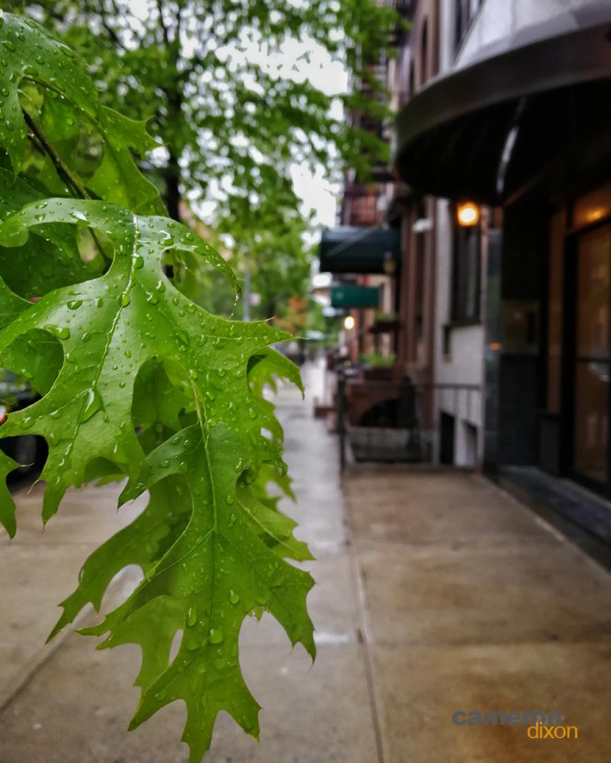 2017-05-New-York-New-Leaf-Cameron-Dixon-1080px