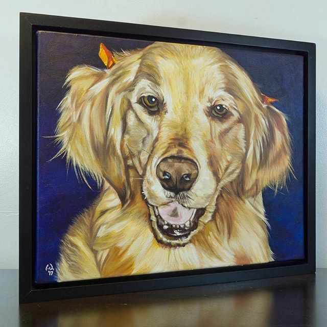 "Pet Portrait PaintingMaggieGolden Retriever16x20 Oil over AcrylicWith included frame (multi-angle)Head to my Etsy store to purchase your own before the Christmas rush. ""CameronDixonsArt"" @ Etsyhttps://www.etsy.com/shop/CameronDixonsArt#ny #nyc #bigapple #newyork #newyorknewyork #newyorkcity #manhatten #eastharlem #photooftheday #igersofnyc #newyorkart #newyorkstyle #newyorkartist #canadianartist #petportrait #petpainting #goldenretriever #goldenretrieversofinstagram #oilpainting #art #paint #artistforhire #commission #goldenretrieversofig #etsy #etsystore"