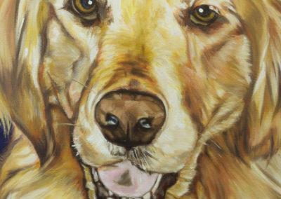 Cameron Dixon - DSC00114-pet-portrait-Mags-front-closeup-1080px