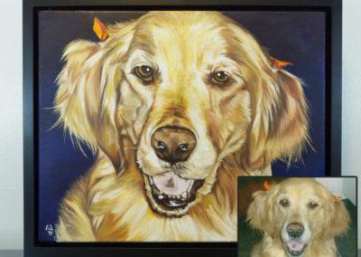 Cameron Dixon - DSC00114-pet-portrait-Mags-front-frame-inset-1080px