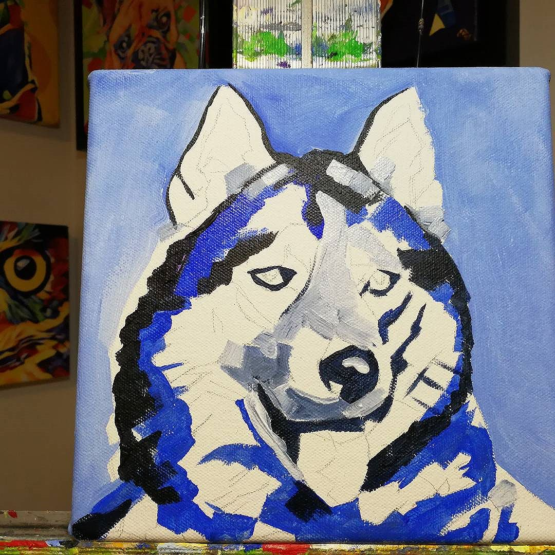 Work in Progress - PopArt Husky. 8in x 8in Oil over Acrylic  I sometimes miss hearing out huskies talking and screaming at us. I used a stock image to work from but this looks a little like our Maui.  Purchase custom commissions direct through my Etsy shop: https://goo.gl/bQyD43  Pricing: www.camerondixon.com/pricing