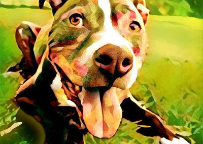 2018-04 - Pet Portrait - Kane-Modified